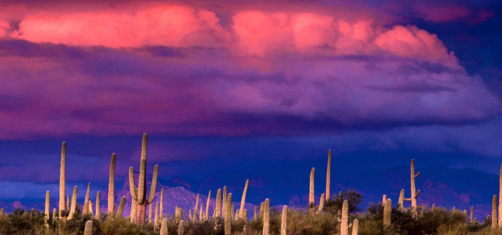 sonoran desert storm